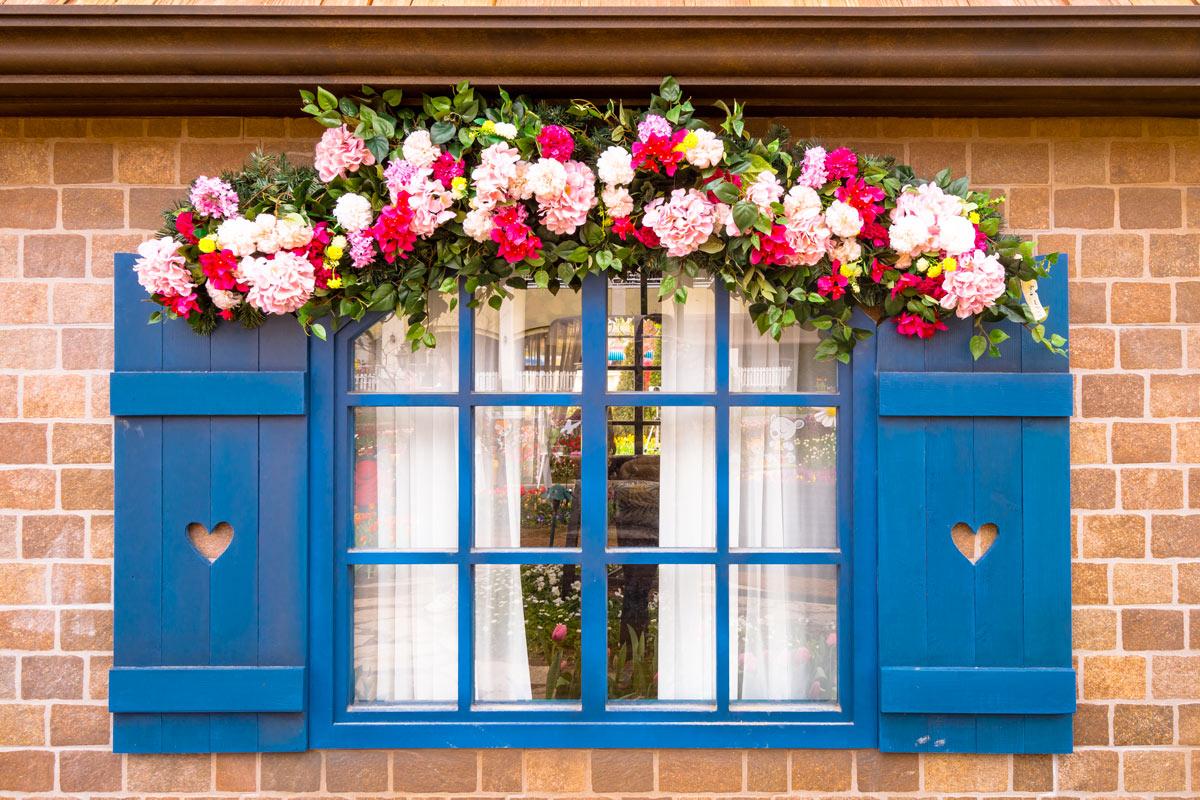 Piante e fiori per abbellire le finestre.
