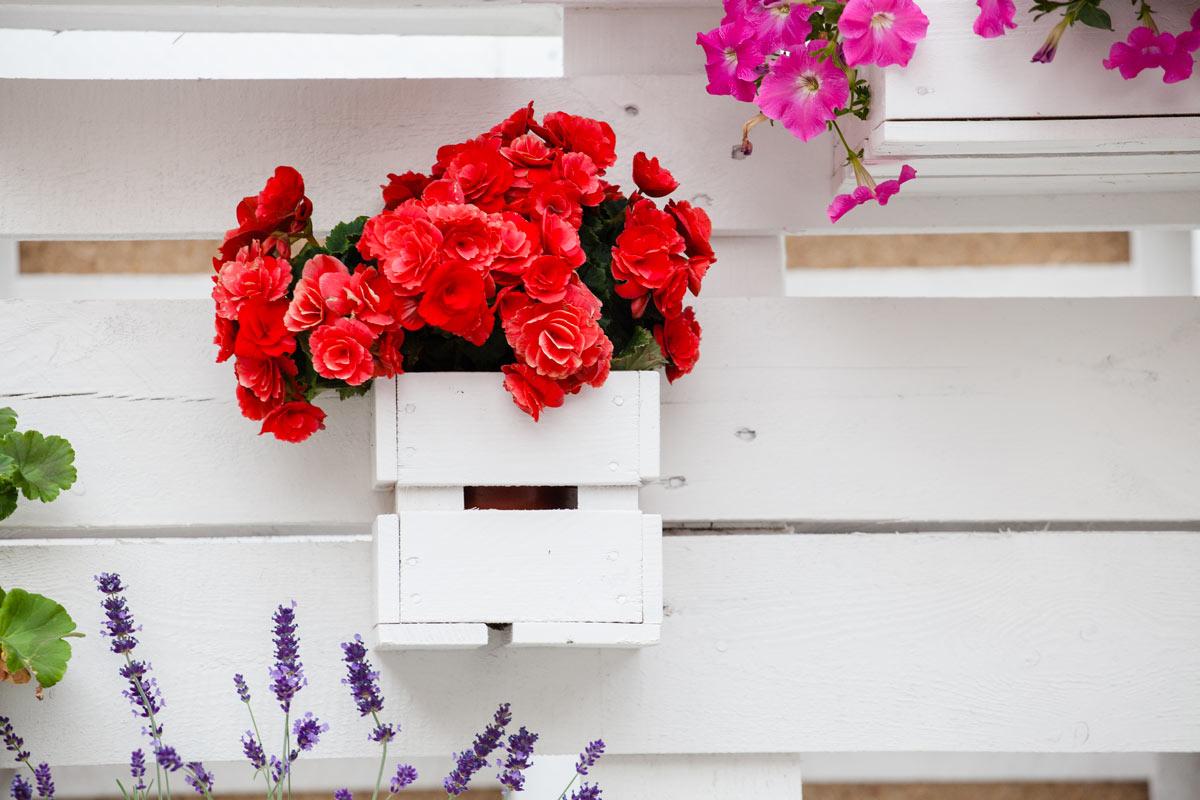 Cassetta di legno fioriera.