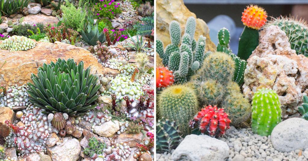 Coltivare le piante grasse tra i sassi.