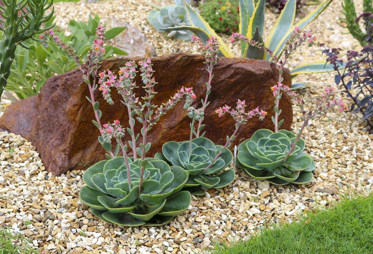 coltivare le piante grasse tra i sassi