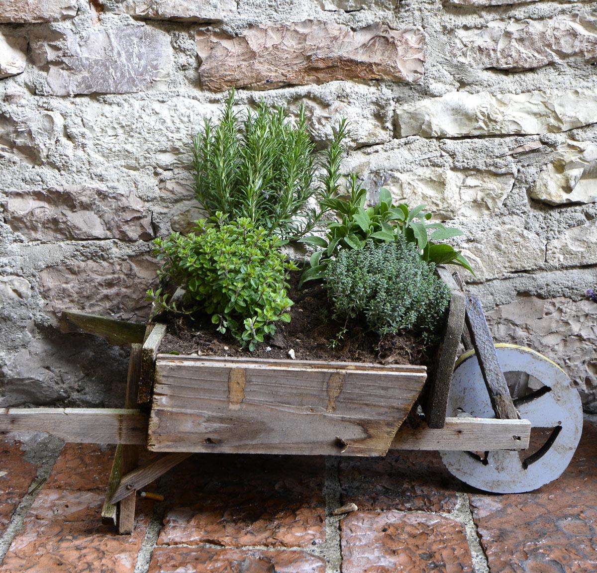 Piantine aromatiche in una piccola carriola di legno.
