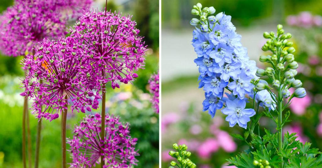 Piante perenni con fiori.