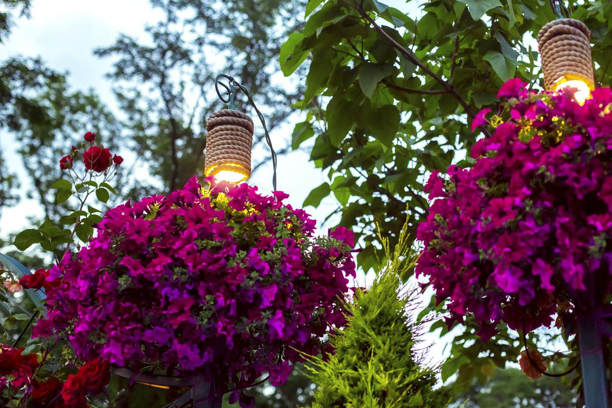 Come illuminare le piante in giardino.