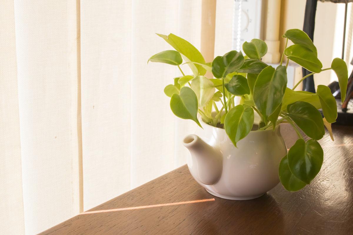 Idee originali per arredare con gusto e stile la casa con il pothos