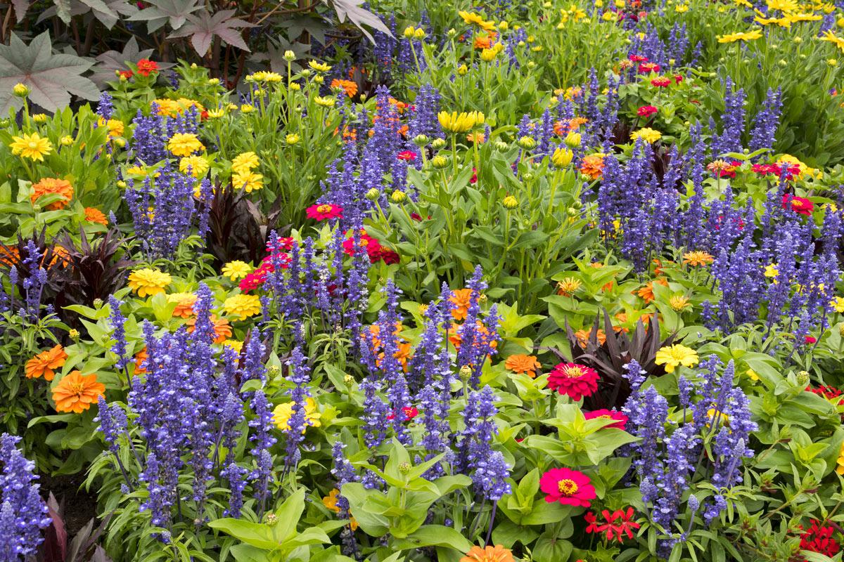Pianta per attirare colibrì e farfalle sul balcone o in giardino