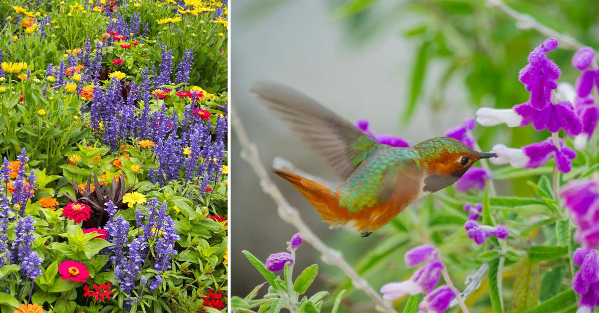 Esempi di piante per attirare colibrì e farfalle