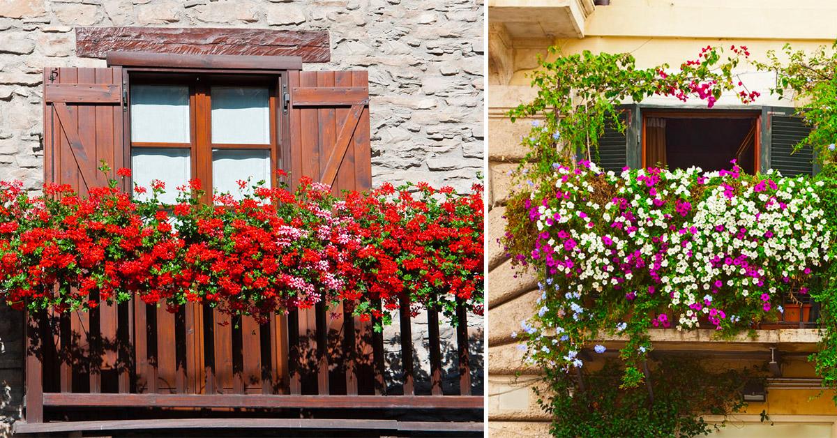 Come decorare la ringhiera del balcone in modo originale con fiori e piante