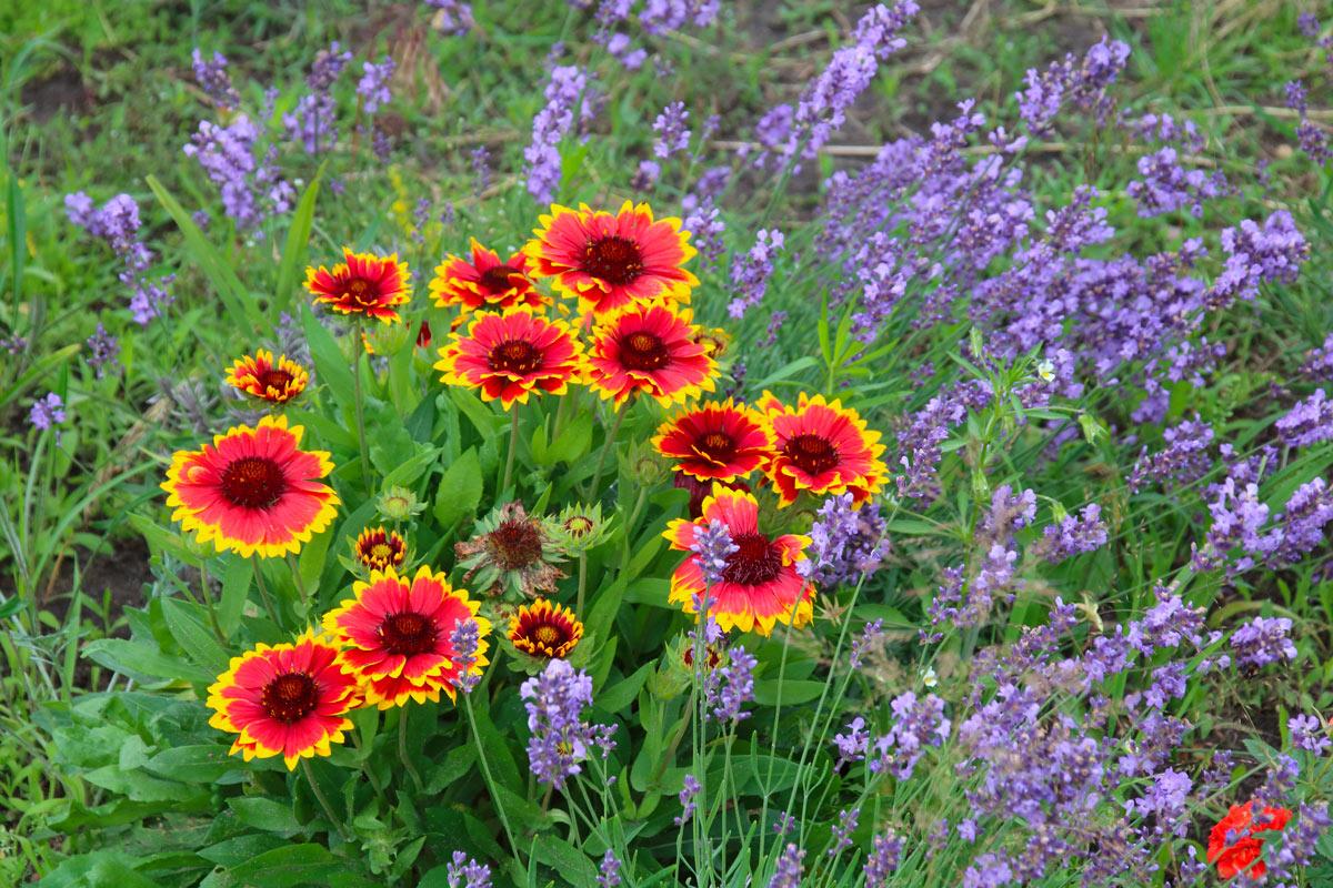 pianta colorata per giardino settembre