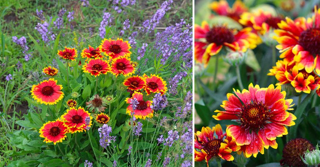PIanta che fiorisce a settembre e rende il giardino coloratissimo