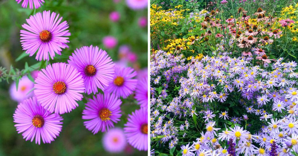 Settembrini fiori.