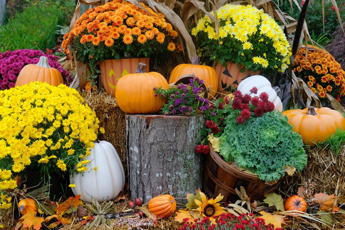 simpatiche idee per decorare il giardino in autunno