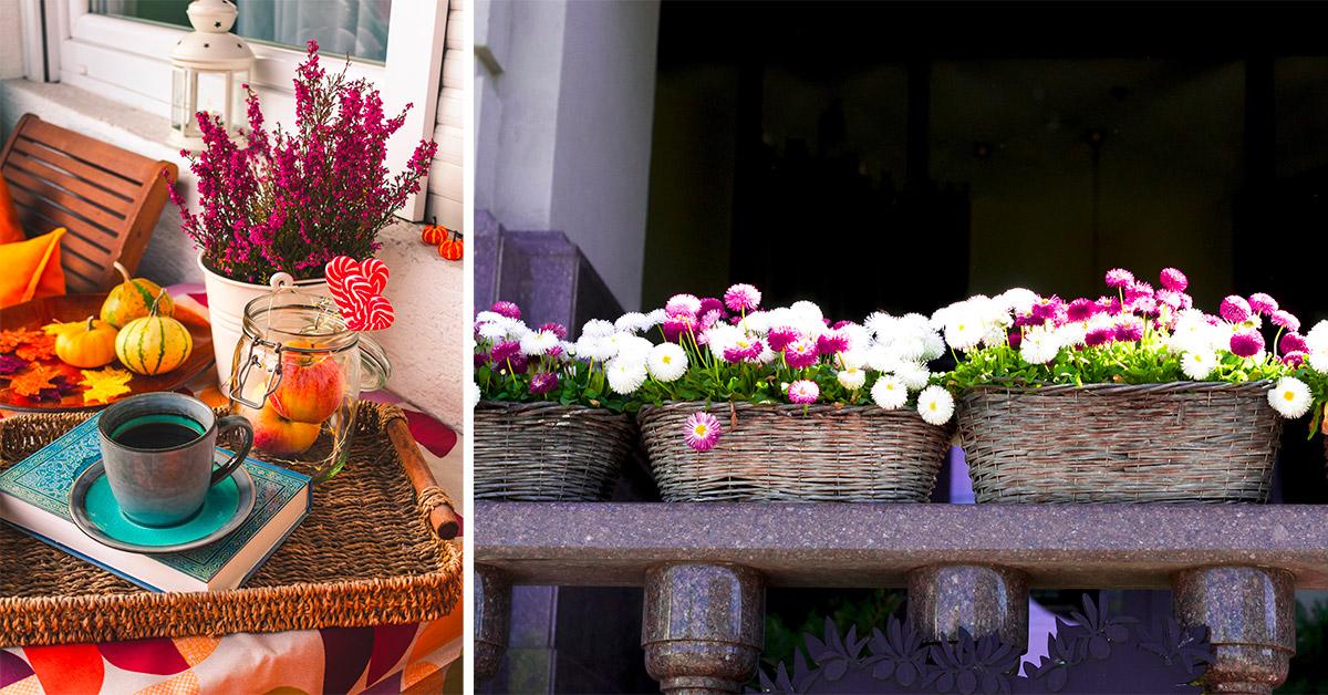 Fiori per avere un balcone fioritissimo anche in autunno