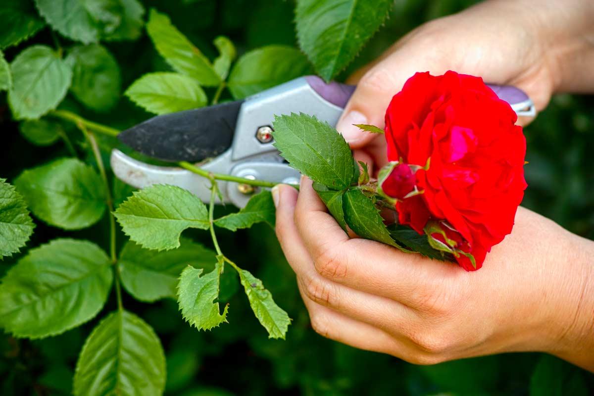 lavori da fare in giardino, balcone e orto in ottobre