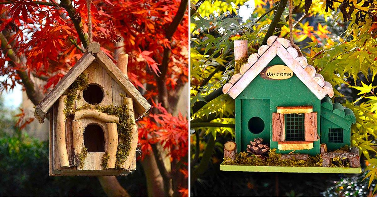 casette per gli uccellini