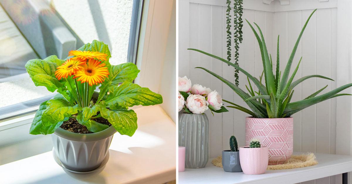 belle piante anti umidità