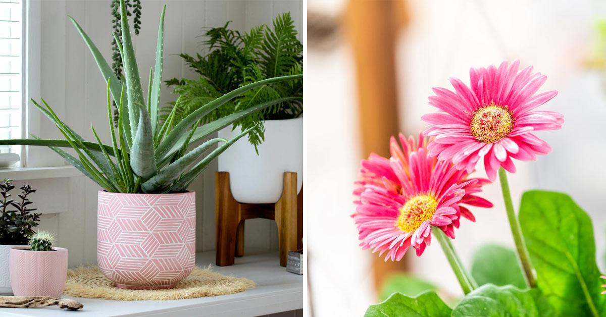 Piante da interno in grado di purificare l'aria in casa.