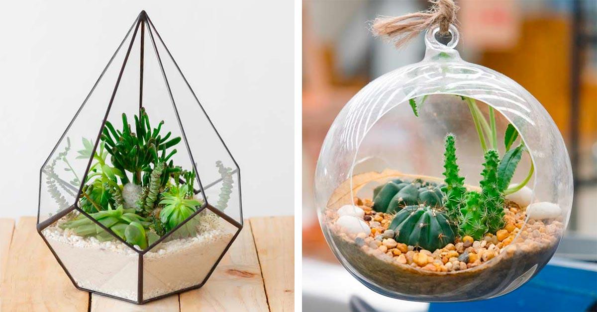 Ecco come realizzare n terraio per piante grasse